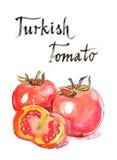 Τουρκική ντομάτα Watercolor Στοκ Εικόνα