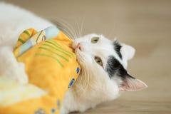 Τουρκικό Van Cat παιχνίδι Στοκ Εικόνες