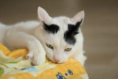 Τουρκικό Van Cat παιχνίδι Στοκ Φωτογραφία