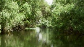 Του δέλτα δασικοί υγρότοποι Δούναβη στην κίνηση φιλμ μικρού μήκους