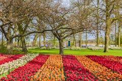 τουλίπα κήπων Στοκ φωτογραφία με δικαίωμα ελεύθερης χρήσης