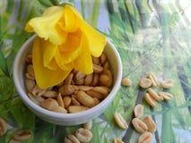 Τουλίπα και καρύδια λουλουδιών Στοκ φωτογραφία με δικαίωμα ελεύθερης χρήσης