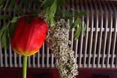 Τουλίπα σύνθεσης και λουλούδια και ακκορντέον spirea Στοκ Εικόνα