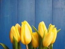 τουλίπες δεσμών κίτρινε&sigma Στοκ φωτογραφία με δικαίωμα ελεύθερης χρήσης