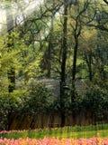 Τουλίπες και άνθη άνοιξη στην Κίνα Στοκ φωτογραφία με δικαίωμα ελεύθερης χρήσης