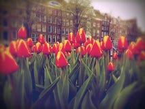 Τουλίπες και σπίτια καναλιών στο Άμστερνταμ Στοκ φωτογραφία με δικαίωμα ελεύθερης χρήσης