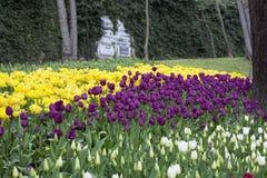 Τουλίπες στο πάρκο στην άνοιξη Στοκ εικόνα με δικαίωμα ελεύθερης χρήσης