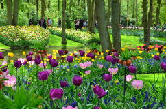 Τουλίπες την άνοιξη κάτω από το φωτεινό ήλιο στον κήπο Keukenhof, Κάτω Χώρες Στοκ εικόνα με δικαίωμα ελεύθερης χρήσης