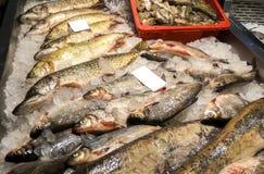 Του γλυκού νερού αγορά ψαριών, Ευρώπη, ΕΚ στοκ φωτογραφίες