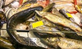 Του γλυκού νερού αγορά ψαριών, Ευρώπη, ΕΚ στοκ φωτογραφία με δικαίωμα ελεύθερης χρήσης