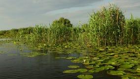 Του δέλτα υγρότοποι Δούναβη στην κίνηση φιλμ μικρού μήκους