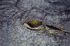 του δέλτα okavango κροκοδείλ&omega Στοκ εικόνα με δικαίωμα ελεύθερης χρήσης