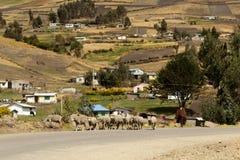 Του Εκουαδόρ shepard στοκ φωτογραφία με δικαίωμα ελεύθερης χρήσης