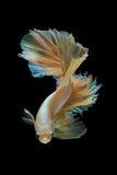 του 2012 καρτών νέο διανυσματικό έτος απεικόνισης δράκων χρυσό Στοκ Φωτογραφία