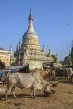 Του χωριού ζωή - Bagan - το Μιανμάρ στοκ εικόνες με δικαίωμα ελεύθερης χρήσης