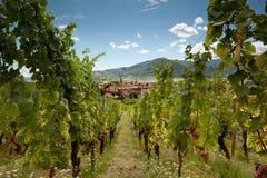 του χωριού κρασί της Αλσατίας στοκ εικόνες