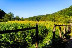 Του χωριού περιβάλλον στην Τουρκία Στοκ φωτογραφίες με δικαίωμα ελεύθερης χρήσης