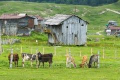 Του χωριού τοπίο Στοκ φωτογραφία με δικαίωμα ελεύθερης χρήσης