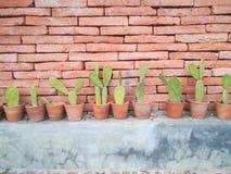 Τούβλινη σύσταση τοίχων με το υπόβαθρο cautus στοκ φωτογραφίες