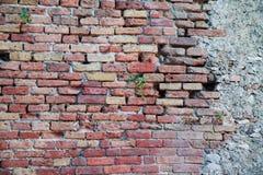 Τούβλο-πέτρινος τοίχος σύστασης Punching εγκαταστάσεις μέσω των πετρών στοκ εικόνα με δικαίωμα ελεύθερης χρήσης