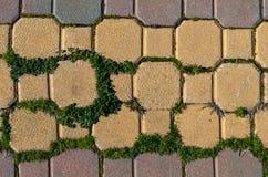 Τούβλα και πράσινος Στοκ Φωτογραφίες