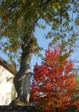 Το άγαλμα αφήνει με τη φωτεινή κόκκινη άποψη από τη σωστή τράπεζα του Brenta Oriago μια πόλη στην επαρχία της Βενετίας στο Βένετο Στοκ Εικόνες
