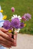 Το άγριο λουλούδι από το υποστήριγμα Rigi σας ευχαριστεί Στοκ εικόνες με δικαίωμα ελεύθερης χρήσης