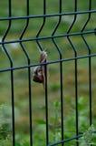 Το άγριο σαλιγκάρι Στοκ Φωτογραφίες