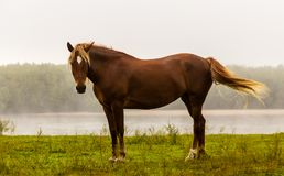 Το άλογο είναι στην όχθη ποταμού στοκ εικόνα με δικαίωμα ελεύθερης χρήσης