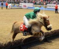 Το άλογο εμφανίζει Στοκ Φωτογραφία