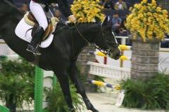 το άλογο εμφανίζει Στοκ Εικόνες