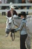 το άλογο εμφανίζει Στοκ Εικόνα