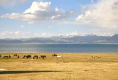 Το άλογο σε ένα μεγάλο λιβάδι στη λίμνη τραγουδιού kul, Naryn του Κιργιστάν Στοκ Εικόνα