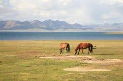 Το άλογο σε ένα μεγάλο λιβάδι στη λίμνη τραγουδιού kul, Naryn του Κιργιστάν Στοκ Φωτογραφία