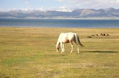 Το άλογο σε ένα μεγάλο λιβάδι στη λίμνη τραγουδιού kul, Naryn του Κιργιστάν Στοκ Εικόνες