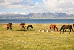 Το άλογο σε ένα μεγάλο λιβάδι στη λίμνη τραγουδιού kul, Naryn του Κιργιστάν Στοκ εικόνες με δικαίωμα ελεύθερης χρήσης