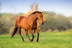 Το άλογο τρέχει ελεύθερο στοκ φωτογραφίες