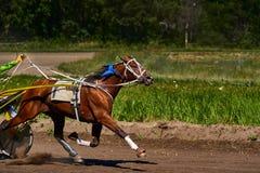 Το άλογο τρέχει με υψηλή ταχύτητα κατά μήκος της διαδρομής της πίστας αγώνων Στοκ Εικόνα
