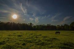 Το άλογο τρώει στον ήλιο λίγο πριν το ηλιοβασίλεμα Στοκ Εικόνες