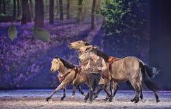 Το άλογο Apassionata εμφανίζει 2013 στοκ εικόνες με δικαίωμα ελεύθερης χρήσης