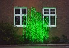 Το λάμποντας δέντρο στα πλαίσια του κτηρίου Στοκ Εικόνες