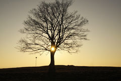 Το λάμποντας δέντρο Στοκ Εικόνα