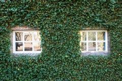 Το άνετο λευκό λίγο παράθυρο με πράσινο βγάζει φύλλα στην εποχή άνοιξης τοίχων Στοκ Φωτογραφία