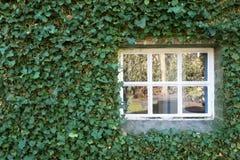 Το άνετο λευκό λίγο παράθυρο με πράσινο βγάζει φύλλα στην εποχή άνοιξης τοίχων Στοκ φωτογραφία με δικαίωμα ελεύθερης χρήσης