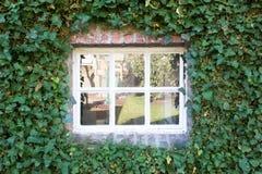 Το άνετο λευκό λίγο παράθυρο με πράσινο βγάζει φύλλα στην εποχή άνοιξης τοίχων Στοκ Φωτογραφίες