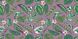Το άνευ ραφής σχέδιο με τροπικό Calathea, Pothos και Monstera τα φύλλα και τα λουλούδια στο πορφυρό υπόβαθρο ελεύθερη απεικόνιση δικαιώματος