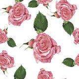 Το άνευ ραφής σχέδιο με τρυφερό αυξήθηκε ρόδινα λουλούδια η διακοσμητική εικόνα απεικόνισης πετάγματος ραμφών το κομμάτι εγγράφου διανυσματική απεικόνιση