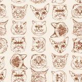 Το άνευ ραφής σχέδιο με τις σιαμέζες, βρετανικές, σιβηρικές, περσικές, σκωτσέζικες πτυχές γατών, Μαίην Coon, Βεγγάλη, Sphynx στο  Στοκ Εικόνα
