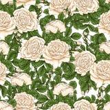 Το άνευ ραφής floral σχέδιο με τα τριαντάφυλλα, χέρι σύρει Στοκ Φωτογραφίες