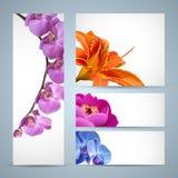 το άνθος ανθίζει orchid κρίνων το peony διάνυσμα ελεύθερη απεικόνιση δικαιώματος